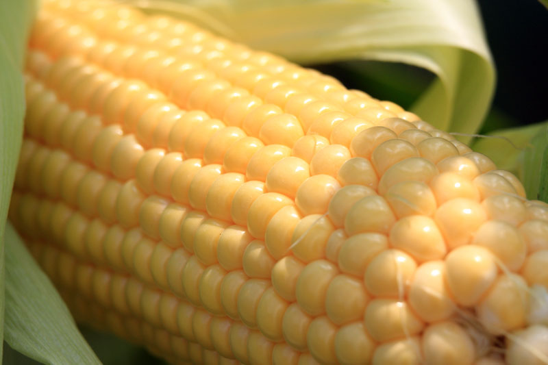 Close look at fresh corn